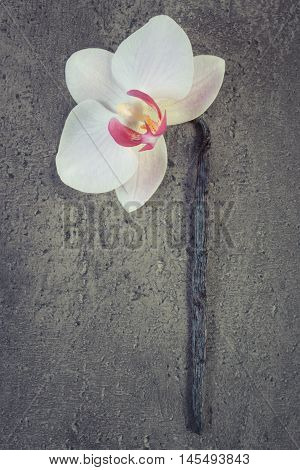 Vintage Photo, Blooming Orchid And Fragrant Vanilla Sticks