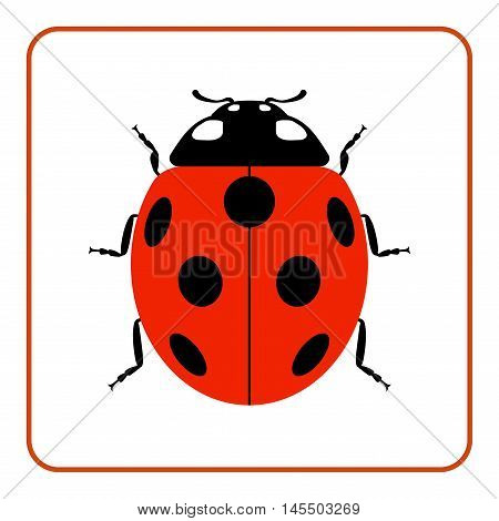 Ladybug small icon. Red lady bug sign isolated on white background. Wildlife animal design. Cute colorful ladybird. Insect cartoon beetle. Symbol of nature spring summer. Vector illustration