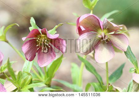 Macro - image of the blooming flowers