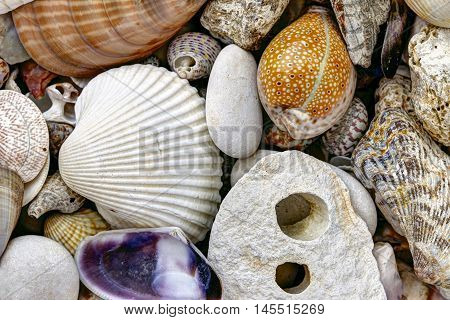 Detail of the pebble stones and shells