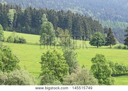 Image of landscape - meadows and forests