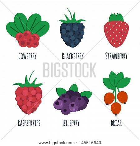 Cowberry blackberry strawberry raspberry bilberry and briar flat icons. Vector illustration of berris isolated on white background. Icons for market shops and fruit sales.