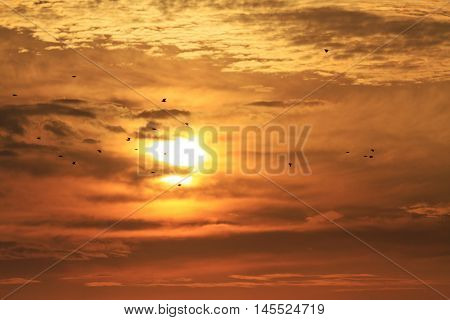 starlings flying in the background sunrise, migration, flock of birds silhouettes, beautiful colors