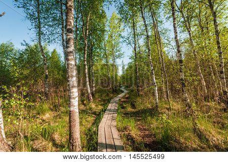 Wooden path on bog land in Estonia