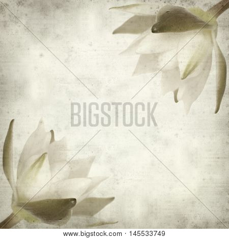 textured old paper background with white waterlily flower
