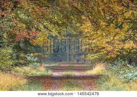 Autumn Lane With Yellow And Orange Beech Leaves