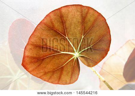 Red leaf close up. Natural background .