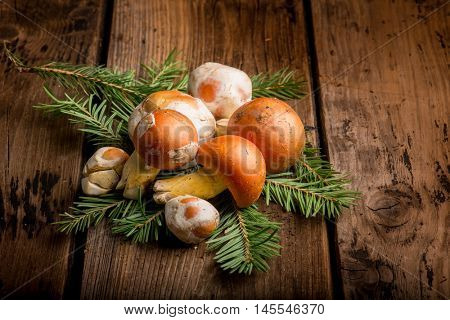 group of ovum mushroom over wood background