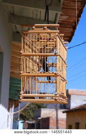 Decorative wooden singing bird cage in Trinidad Cuba.