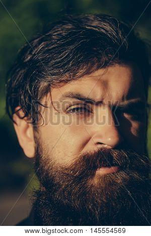 Bearded Man Outdoor