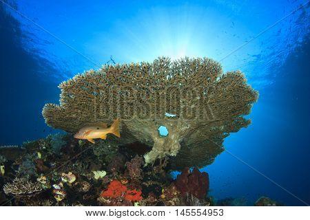 Coral reef underwater. Tropical fish in ocean