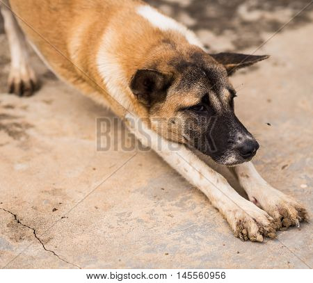 A stray dog beside the building. Thailand
