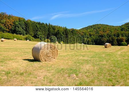 Coils of hay in the field after the grain harvest in Germany with forest on the background.
