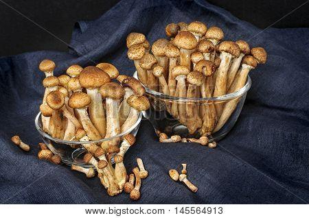 Fresh Forest Edible Mushrooms