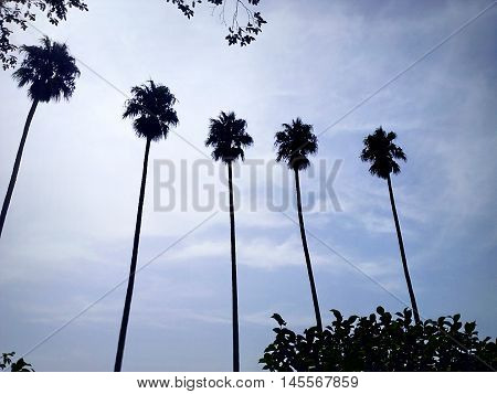 palm trees on a blue sky in the crystal palace gardens in Oporto