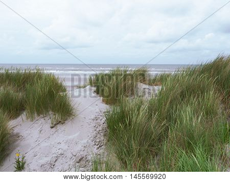 Grasses blowing in the wind along the coast of Ameland in the Waddenzee