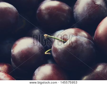 Harvest of ripe plums autumn harvest berry fruit food tasty appetite vitamins benefit nutrition background garden september october