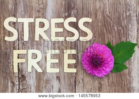 Stress free written with wooden letters and pink dahlia flower