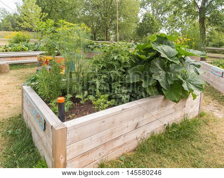 Raised garden beds in neighborhood garden with vegetables