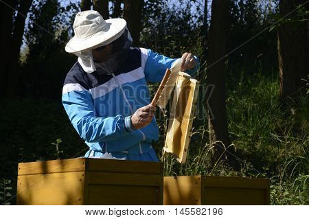 Beekeeper making fresh golden honey from his honey bees
