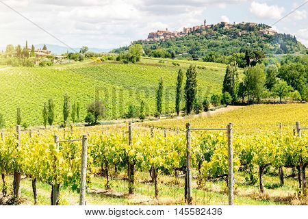 Beautiful tuscan landscape view on the vineyards near Montepulciano town in Italy