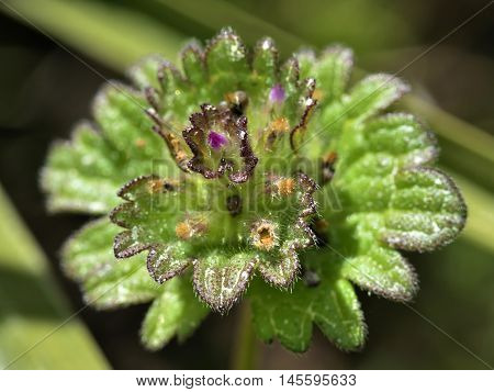 A closeup of a small micro flower on the grass