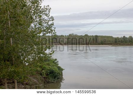 Poplars with river Po - Boretto 5/09/2016