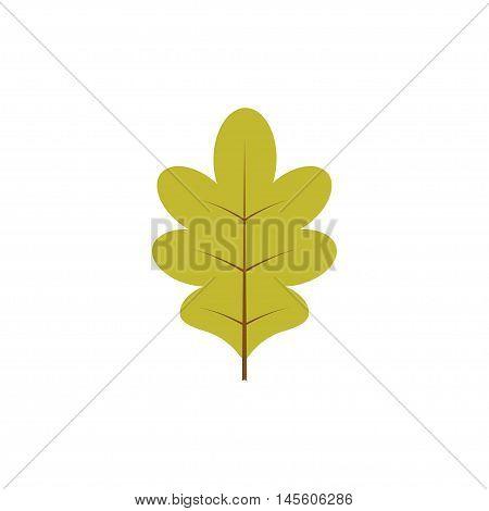 Vector illustration. Autumn decoration. Green oak leaf isolated over white background