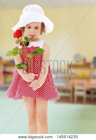 Close-up.Happy little girl in very short red polka dot dress and white summer beach hat, holds a red rose flower against the background of a child's room, concept of education and family values.