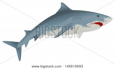 Big white shark marine predator. Isolated vector illustration