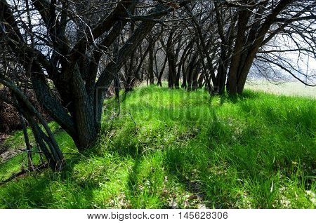 Spring Shade Under The Trees