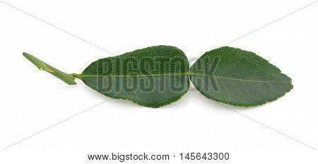 kaffir lime leaves on a white background