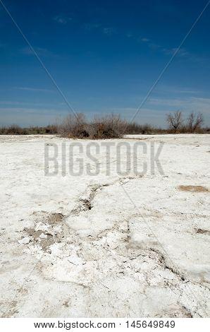 Saline, Salt-marsh