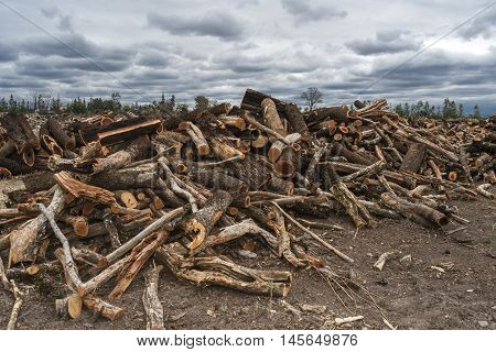 Landscape With Wood In The Field
