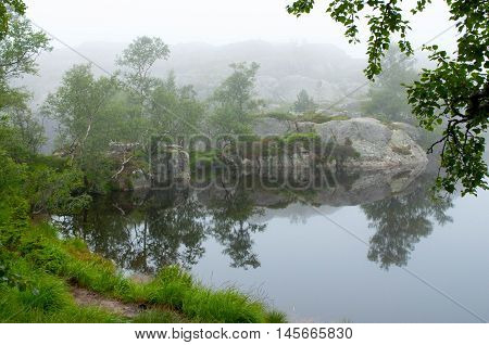 Serene misty morning on a lakeside in the green forest, Norway