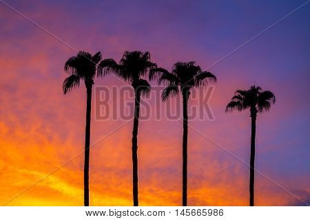 Four palm trees silhouetted against a brilliant Arizona summer sunset.