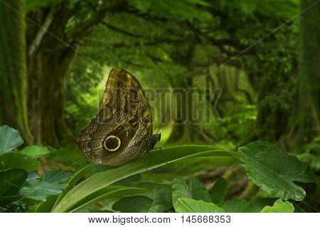 Butterfly in the foreground in the tropical jungle