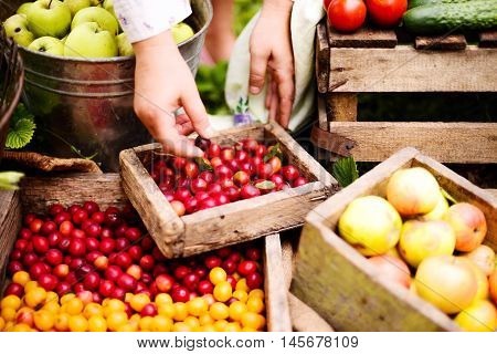 Young Attractive Woman On A Farm. Woman Farmer Picking Fruit Fro