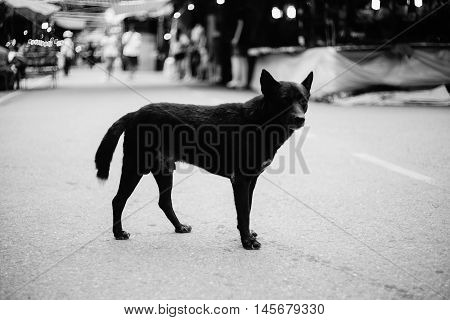 stray dog standing alone on a street,selective focus,black and white color picture style