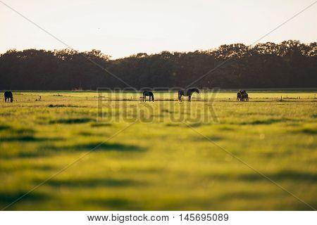 Herd Of Horses Standing On Farmland. Geesteren. Achterhoek. Gelderland. The Netherlands.