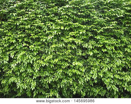 Green leaf, Plant, Natural background in sunny day