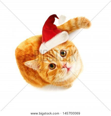 Cat in Santa Hat on White Background. Top View