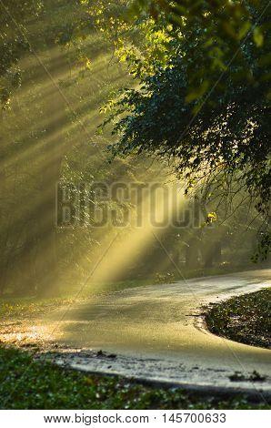 Light bursts on a forest road after the rain in Kosutnjak, Belgrade, Serbia