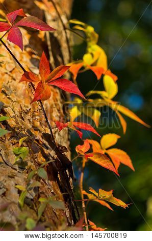 Detail of orange, yellow and red leaves on a sunny autumn day