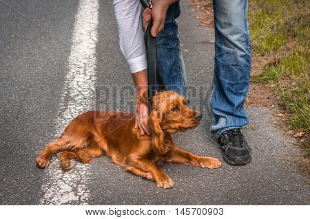 Man Holds A Leather Belt And He Wants To Strangling The Dog
