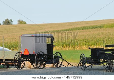 Amish buggies parked in front of corn field in Pennsylvania countryside
