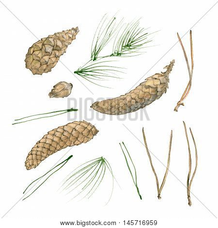 Hand drawn cones and fir-needles isolated on white background. Hand painted texture with fir-needle natural elements