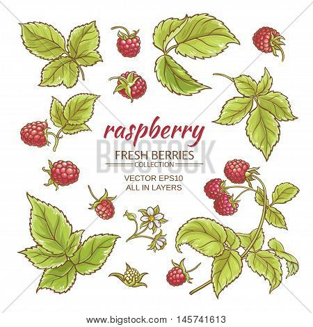 raspberry berries and leaves vector set on whte background