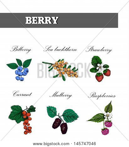Berry set. Color sketch of berries. Vector illustration.
