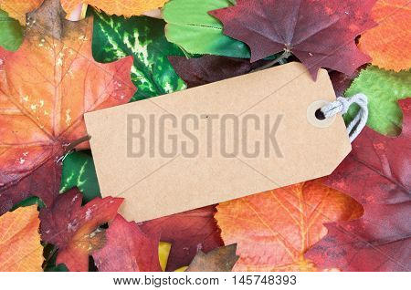 Empty label background amongst several autumn leaves